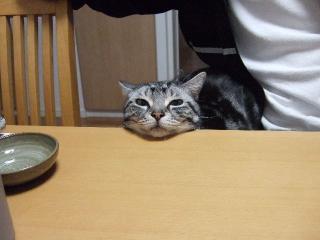 2008_0320cats0004.jpg