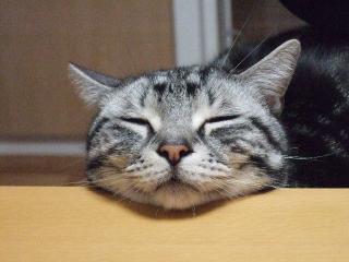 2008_0320cats0006.jpg