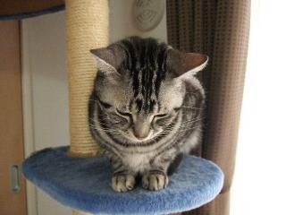 2008_0401cats0001.jpg