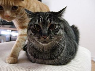 2008_0401cats0003.jpg
