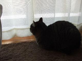 2008_0404cats0003.jpg