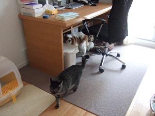 2008_0405cats0001.jpg