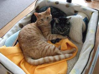 2008_0407cats0030.jpg