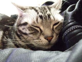 2008_0408cats0081.jpg