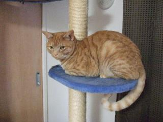 2008_0410cats0045.jpg
