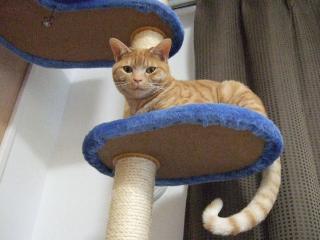 2008_0410cats0046.jpg