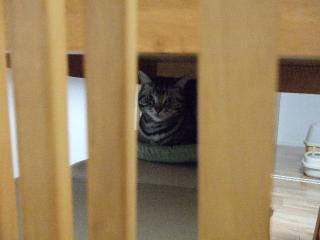 2008_0413cats0107.jpg