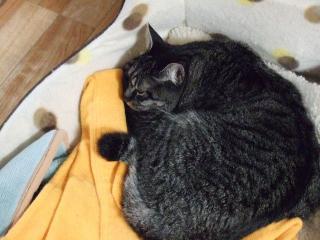 2008_0413cats0108.jpg