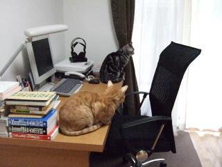 2008_0421cats0075.jpg