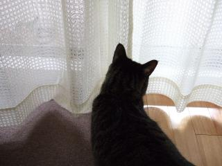 2008_0421cats0077.jpg