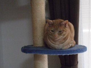 2008_0422cats0079.jpg