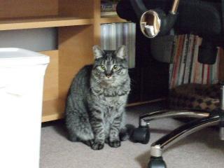 2008_0424cats0089.jpg