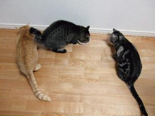 2008_0425cats0190.jpg