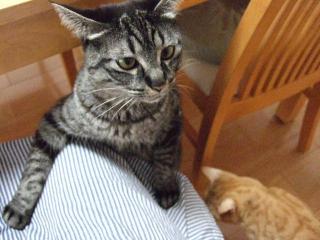 2008_0430cats0107.jpg