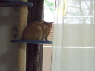 2008_0430cats0215.jpg