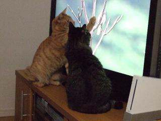 2008_0504cats0121.jpg