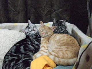 2008_0506cats0130.jpg