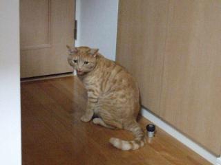 2008_0509cats0133.jpg