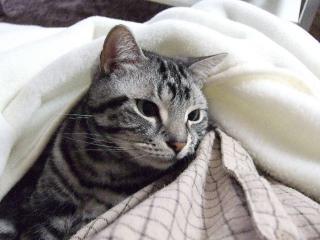 2008_0513cats0138.jpg