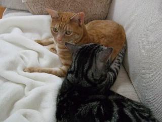 2008_0516cats0145.jpg