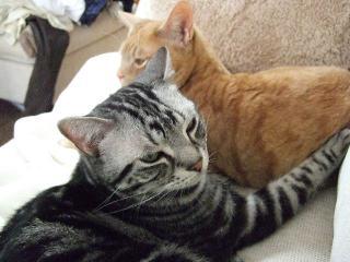 2008_0516cats0146.jpg