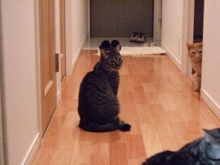 2008_0520cats0147.jpg