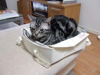 2008_0522cats0155.jpg