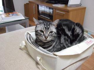 2008_0522cats0156.jpg