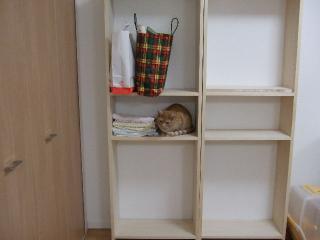 2008_0524cats0157.jpg