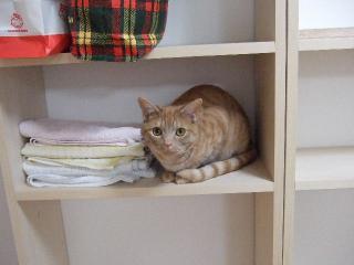 2008_0524cats0158.jpg