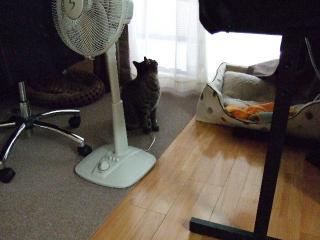 2008_0527cats0159.jpg