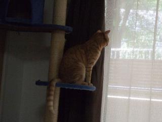 2008_0527cats0161.jpg