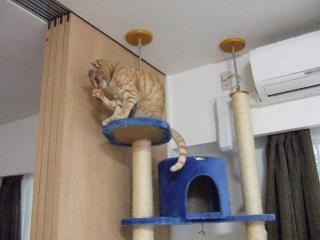 2008_0529cats0166.jpg