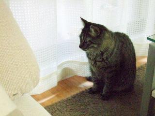 2008_0529cats0167.jpg