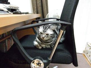 2008_0530cats0169.jpg