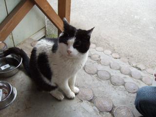 2008_0602cats0043.jpg