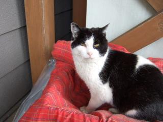 2008_0602cats0045.jpg