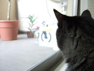 2008_0610cats0054.jpg