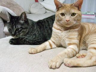 2008_0612cats0061.jpg