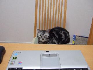 2008_0613cats0064.jpg