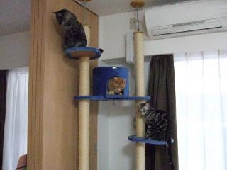2008_0616cats0066.jpg