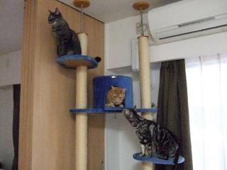 2008_0616cats0067.jpg