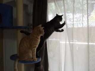 2008_0617cats0074.jpg