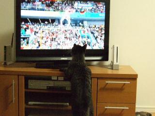 2008_0819cats0122.jpg