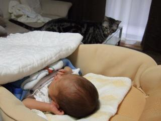 2008_1008cats0013.jpg