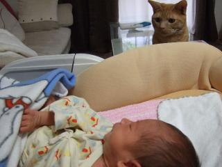 2008_1009cats0016.jpg