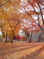 岩手公園1