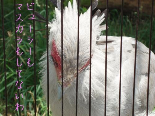 hebikuiwashi05hinomarunosu.jpg