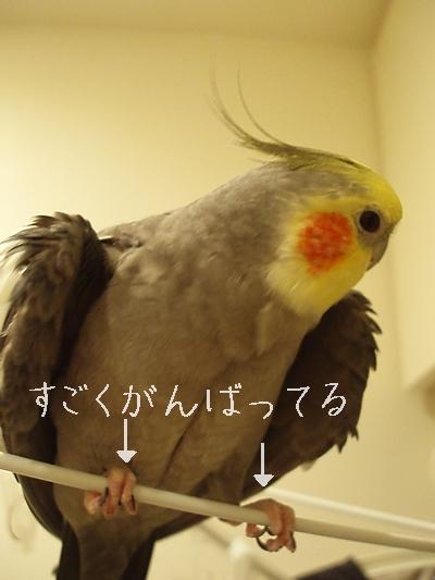 hinomarunosu2008070804.jpg