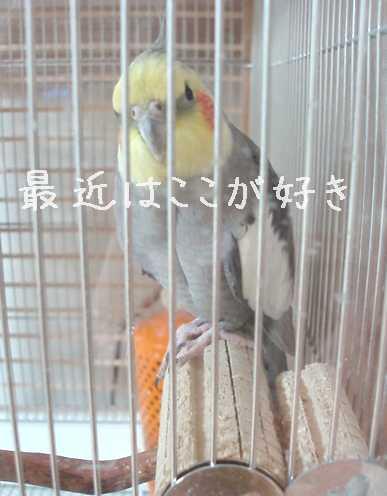hinomarunosu2008110702.jpg